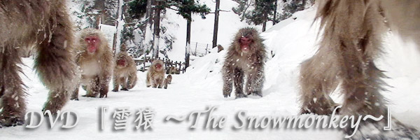 Onsen Spa/Hot spring snow monkey