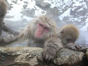 スノーモンキー雪猿 温泉入浴中